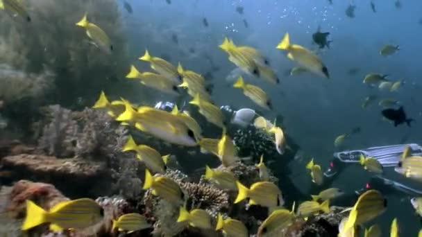 Scuba diver in school fish underwater relax background.