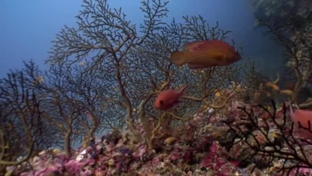 School fish underwater relax background in Maldives.