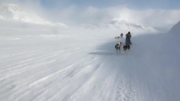 Lidé-expedice na psím spřežením tým husky Eskimo silnici Severní pól v Arktidě.