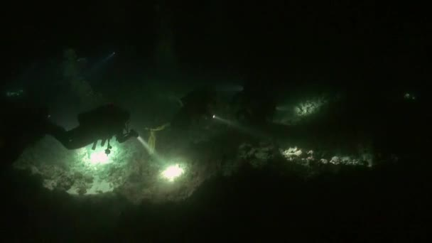 Scuba diver with flashlight on background of bottom at night underwater.