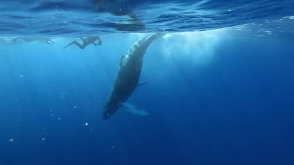 Humpback Whale tail beats diver cameraman underwater in blue Pacific ocean.
