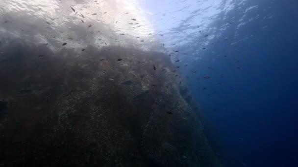 Drop off reef underwater in Pacific ocean.