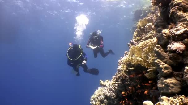 Two deepwater scuba divers swimming near coral reefs underwater in Red sea.