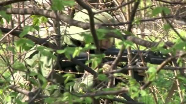 versteckt sich im Wald und nimmt das Objekt unter dem Baum ins Visier.