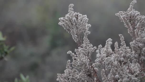 Podzimní příroda. Suché rostliny ve větru. Detail. Podzimní sněhová vločka. Přírodní pozadí