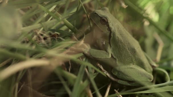 A frog of green color sits in green grass