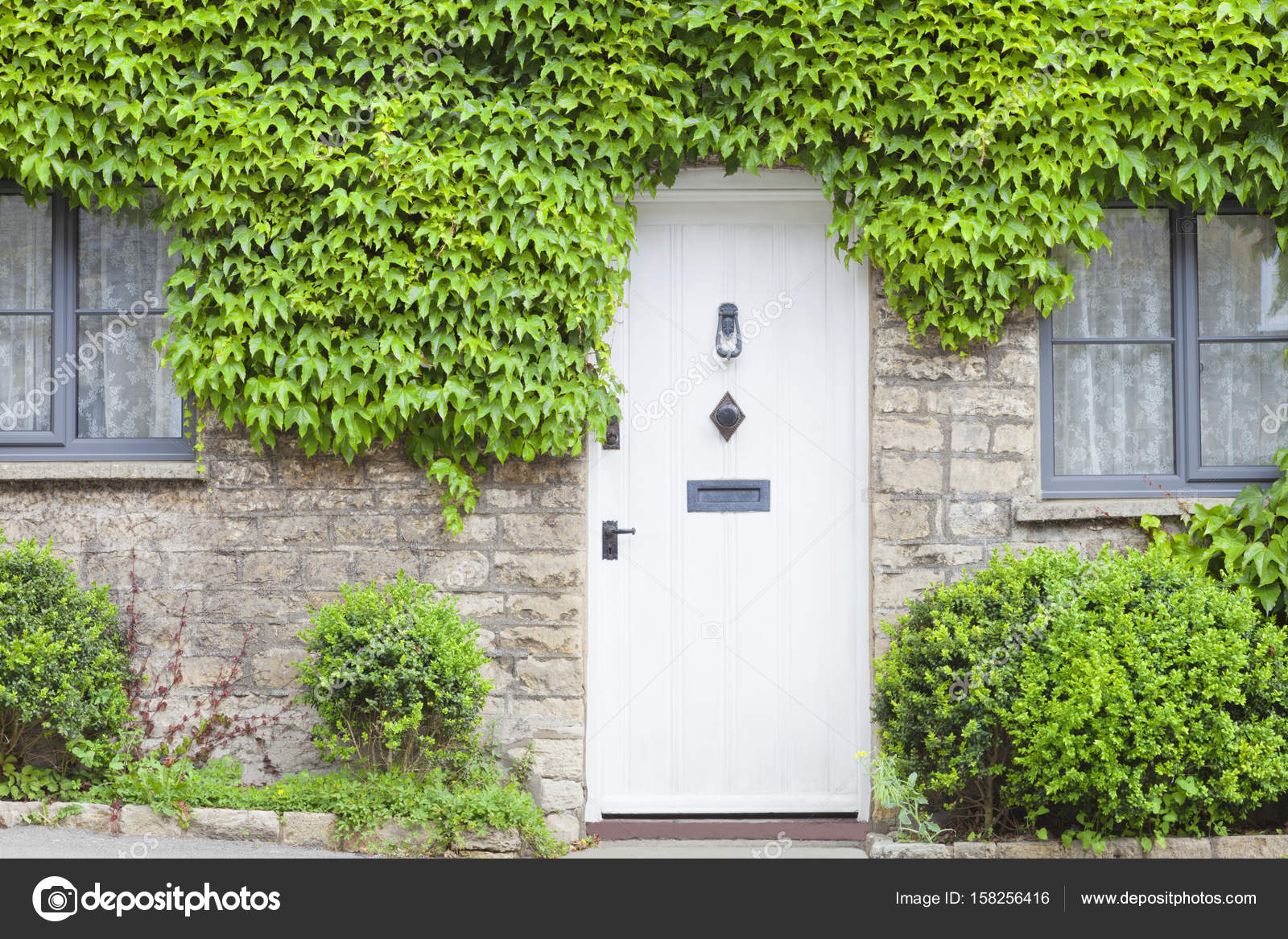 White wooden doors in an old traditional english stone cottage surrounded by climbing green vine plant