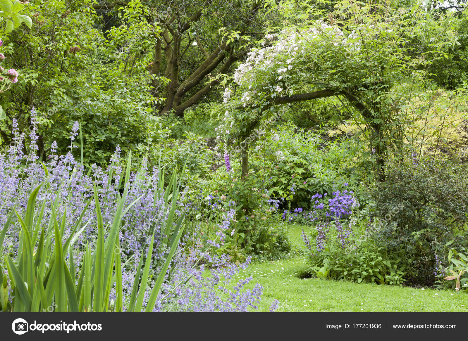 Colourful Summer Garden Bloom White Flowering Rose Arch Leafy Trees