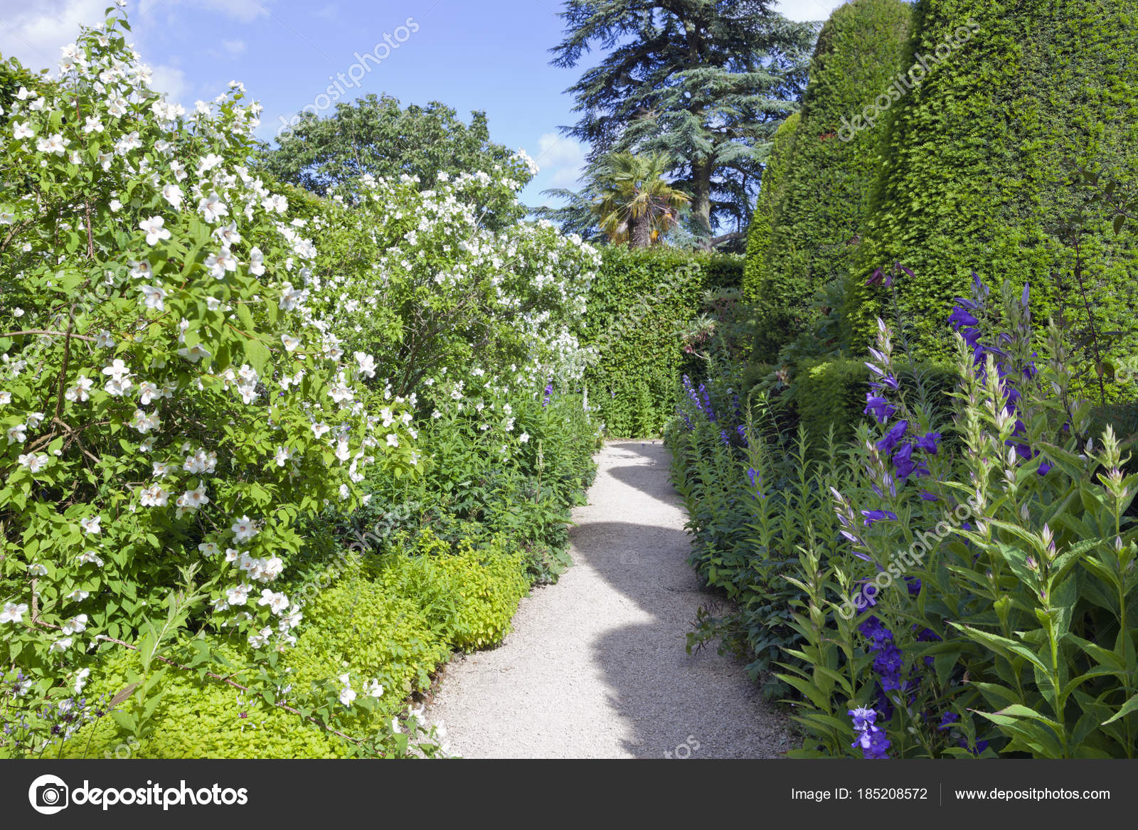 Garden path yew topiary trees white flowering shrubs purple flowers garden path between yew topiary trees and white flowering shrubs purple flowers on a sunny summer day photo by yolfran mightylinksfo