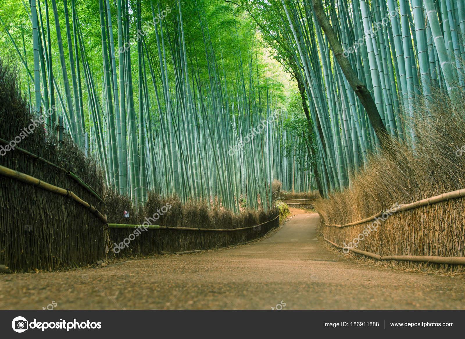 Bambuswald Arashiyama Kyoto Japan Stockfoto C Vividec29 186911888
