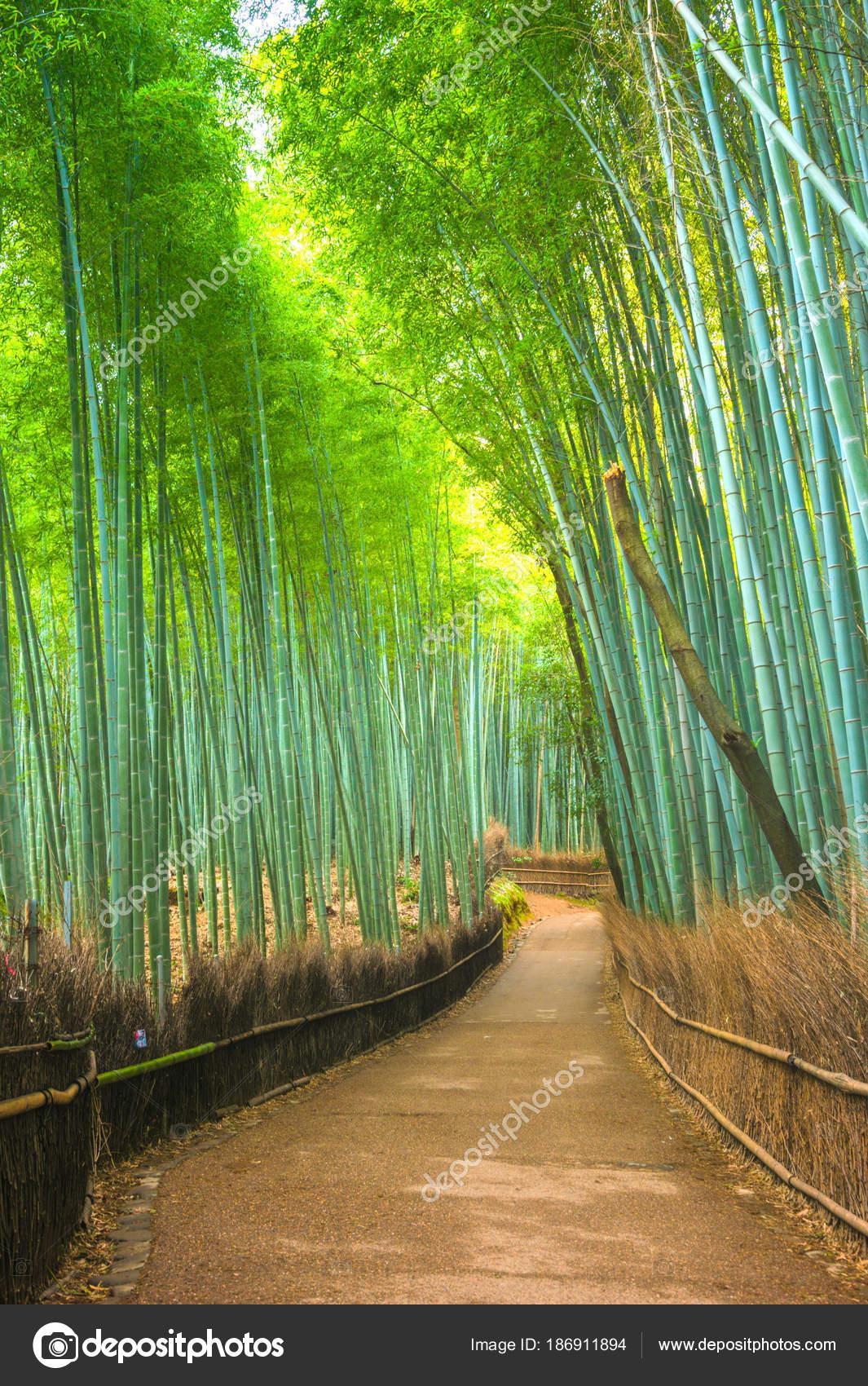 Bambuswald Arashiyama Kyoto Japan Stockfoto C Vividec29 186911894