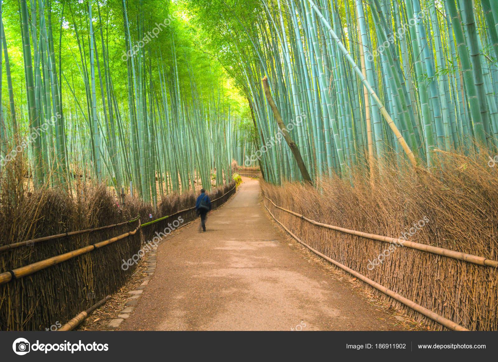 Bambuswald Arashiyama Kyoto Japan Stockfoto C Vividec29 186911902