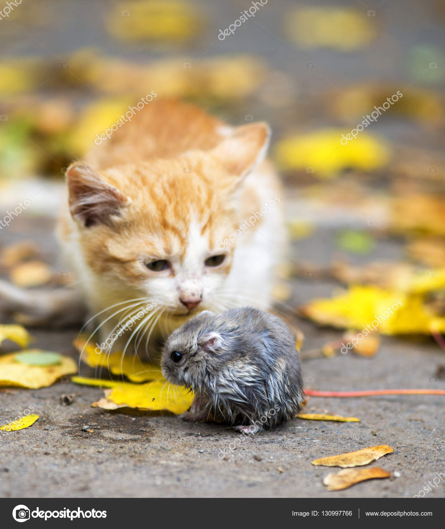 Red cat caught the mouse, cat playing with the mouse — Stock Photo