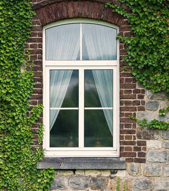 White window covered with green ivy.