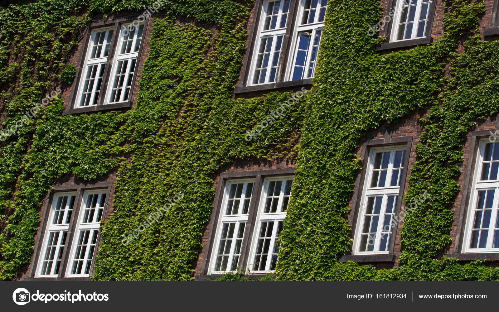 Oude muur met venster begroeid met wilde groene plant exterieur