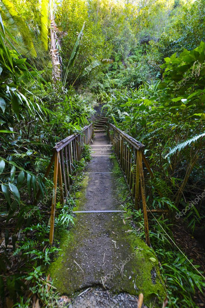 Underwood hiking road, Reunion Island