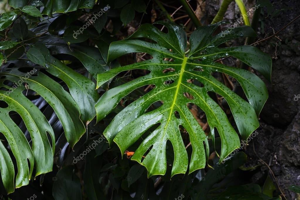 Droplets of green leaf