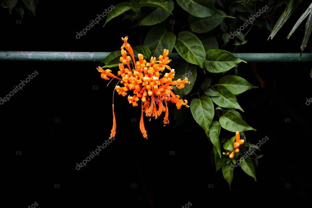 Orange flower on botanical garden