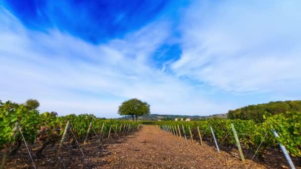 Vinice Frontenas a raod s modrou oblohou