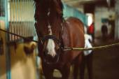 Fotografie horse standing in stable