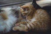 cute cats sleeping on wooden floor