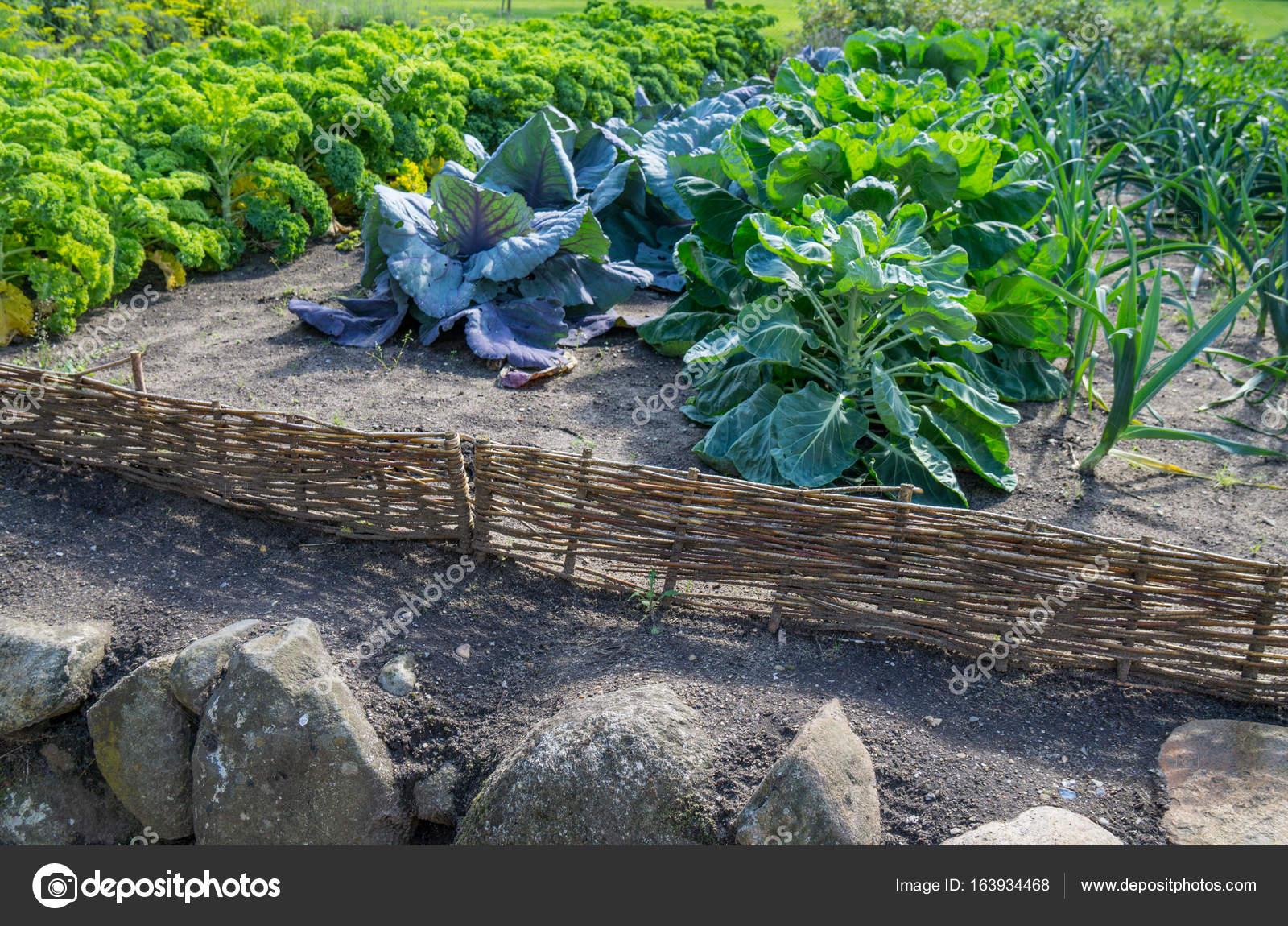Jardin Potager Avec Des Legumes Fait Maison Photographie
