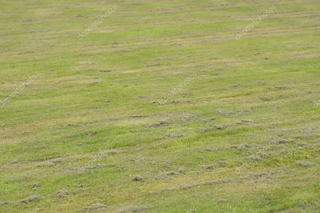 Mowed lawn with mowing strips