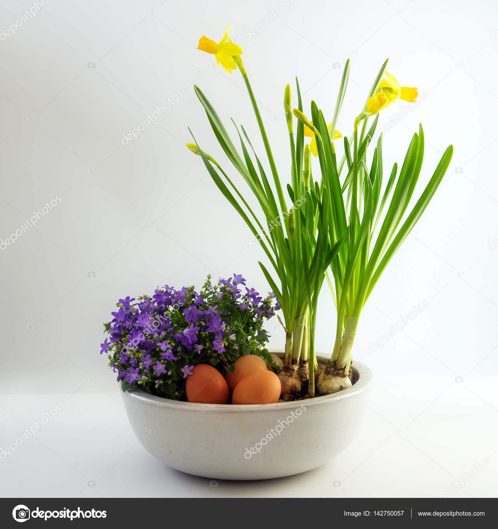Potted spring flowers and eggs as easter decoration daffodils and potted spring flowers and eggs as easter decoration daffodils and bluebells bright gray background mightylinksfo