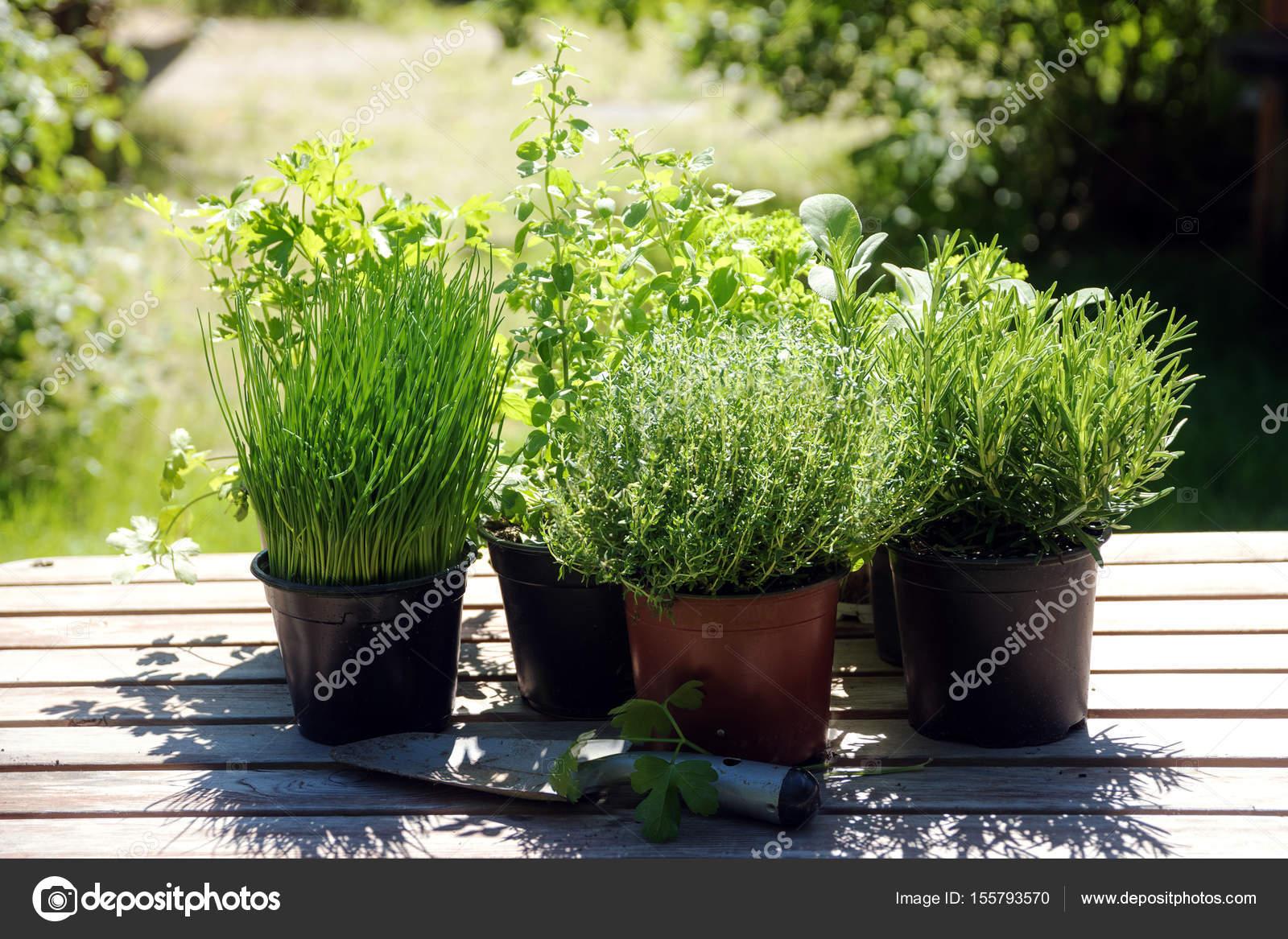 Cucina in vaso piante aromatiche come rosmarino, timo, prezzemolo ...