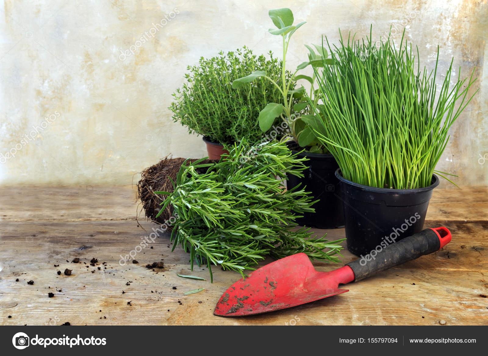 piante di erbe cucina in vasi come rosmarino, timo, salvia, erba ...