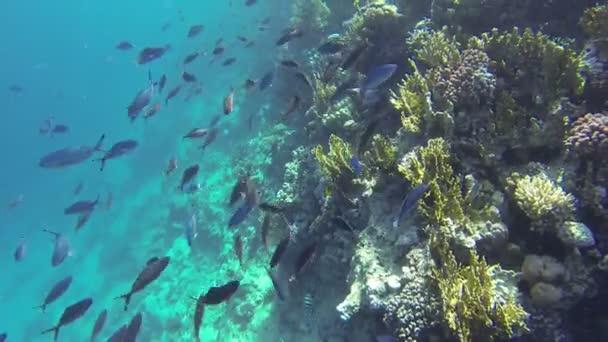Many Fish at Cay