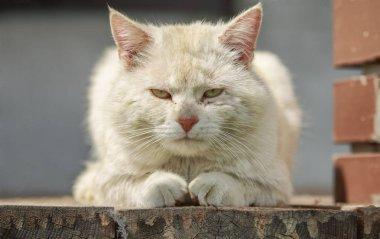 Cat Godfather Portret