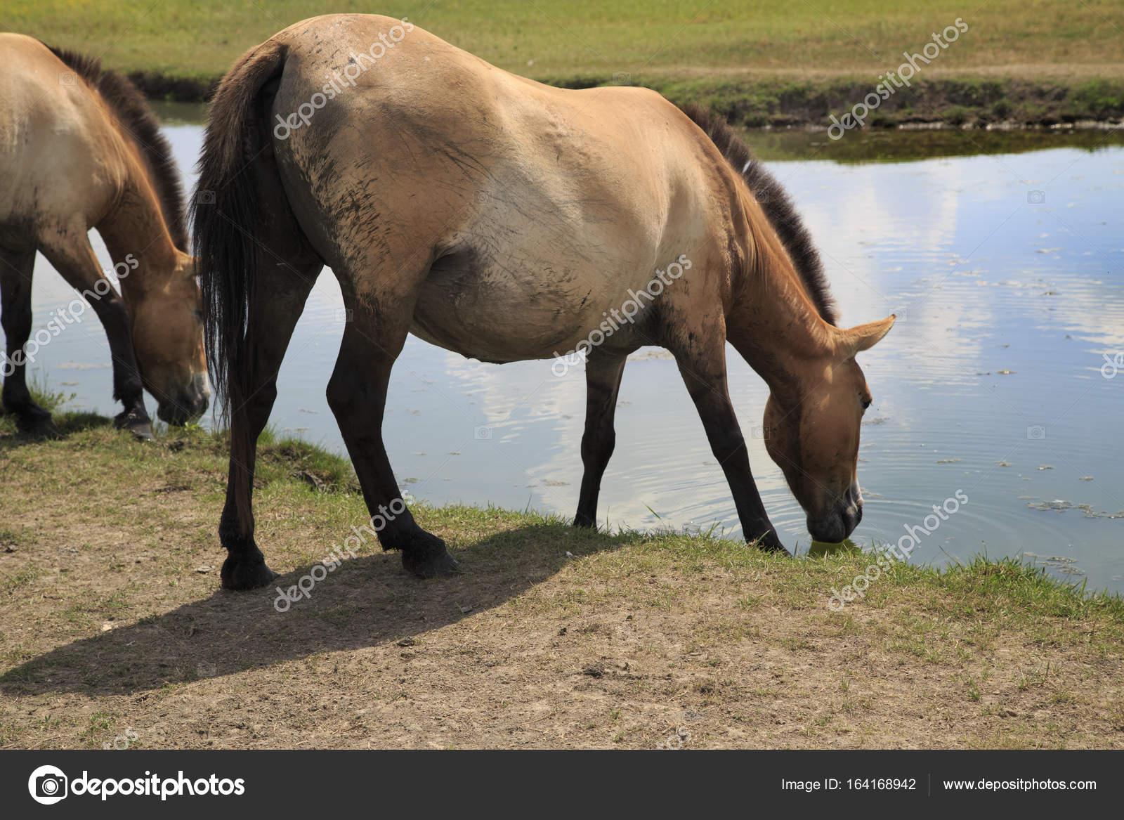Wildes Pferd zur Tränke — Stockfoto © vzmaze #164168942