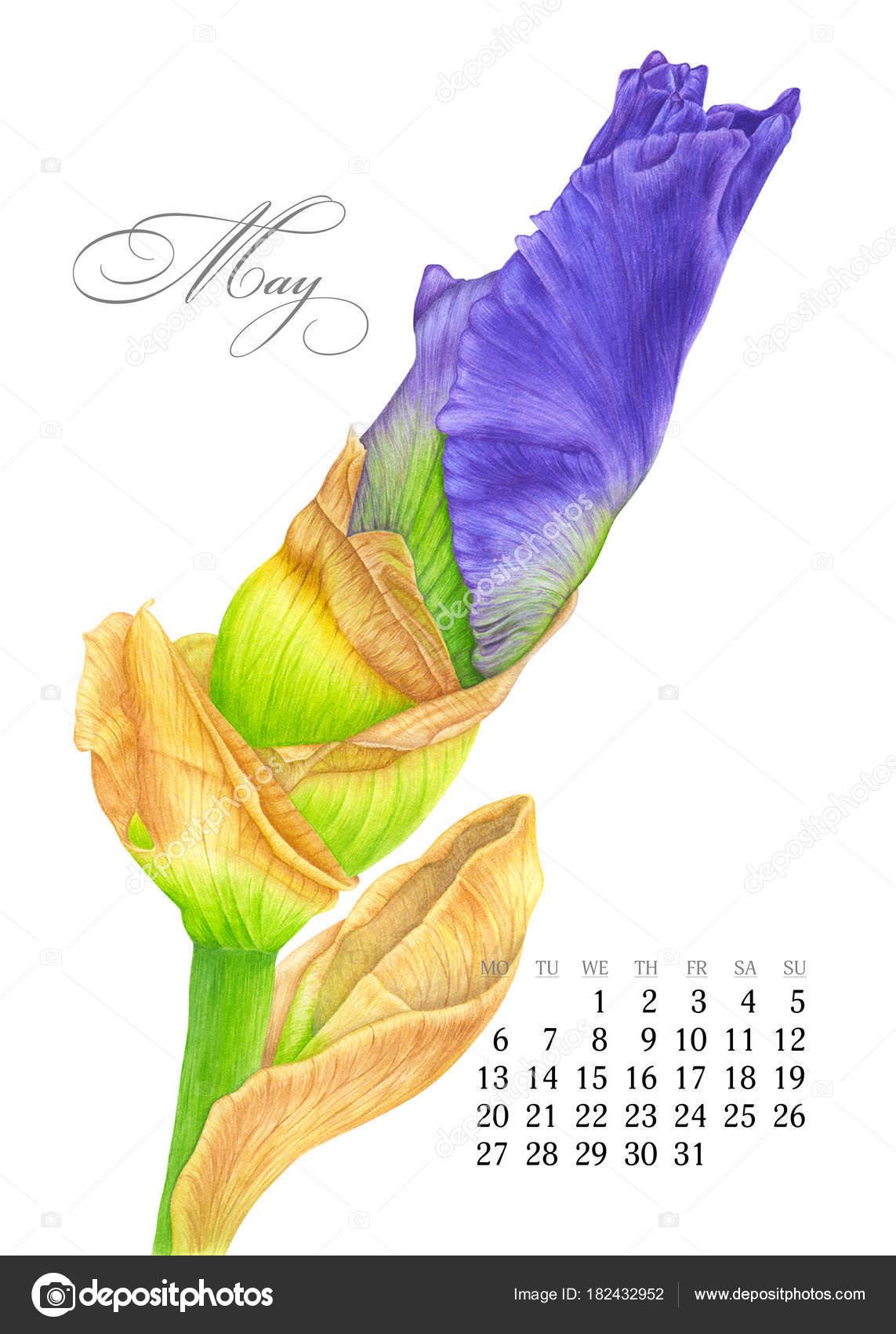 nyomtatható naptár 2019 november Elegáns nyomtatható naptár 2019. Lehet. Akvarell írisz. Botanikai  nyomtatható naptár 2019 november