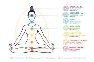 Chakras system of human body - used in Hinduism, Buddhism and Ayurveda. For design, associated with yoga - poster, banner. Vector Sahasrara, Ajna, Vishuddha, Anahata, Manipura, Swadhisthana, Muladhara stock vector