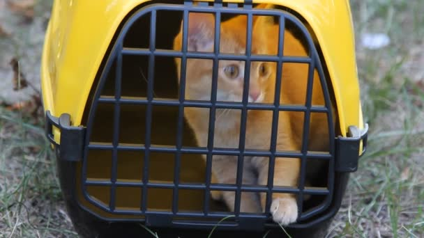 red cat sitting in yellow pet carrier for animals