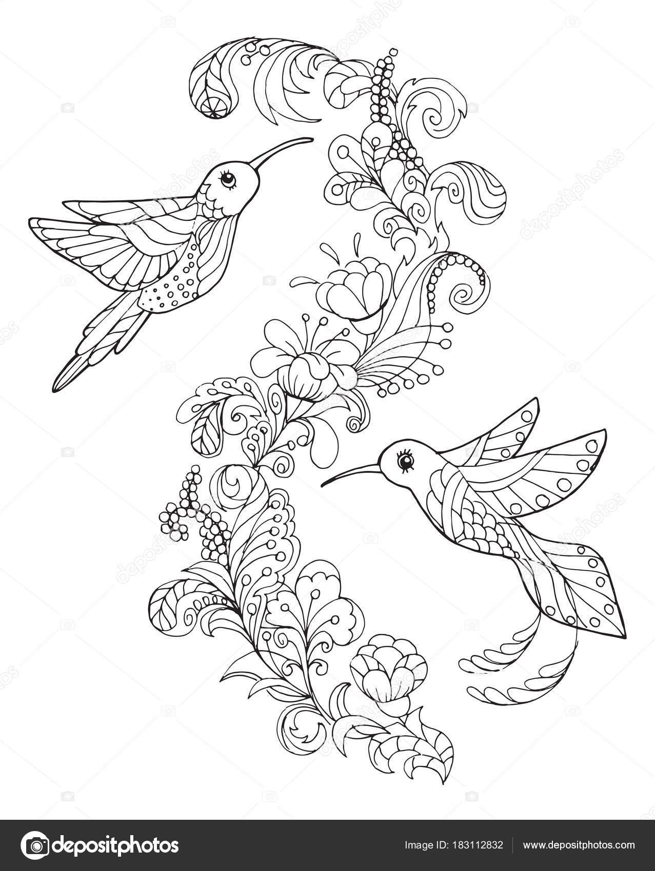 Hummingbird Coloring Book Stock Vector C Snowkat 183112832