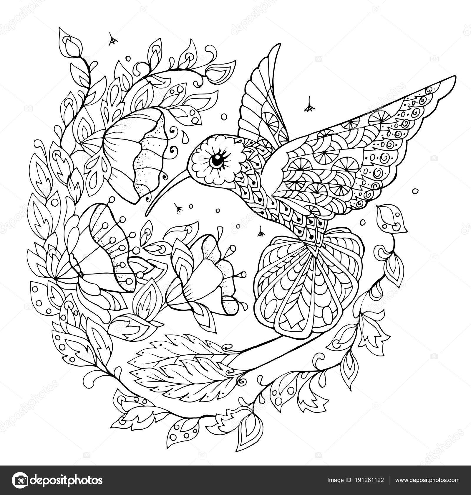 Hummingbird Coloring Book Hummingbird Coloring Book Stock