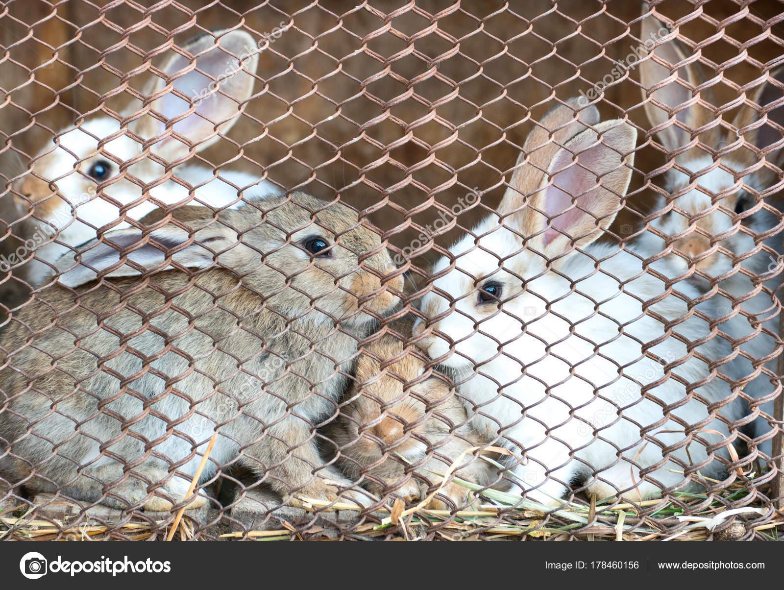 Kaninchen im Käfig — Stockfoto © Andregric #178460156