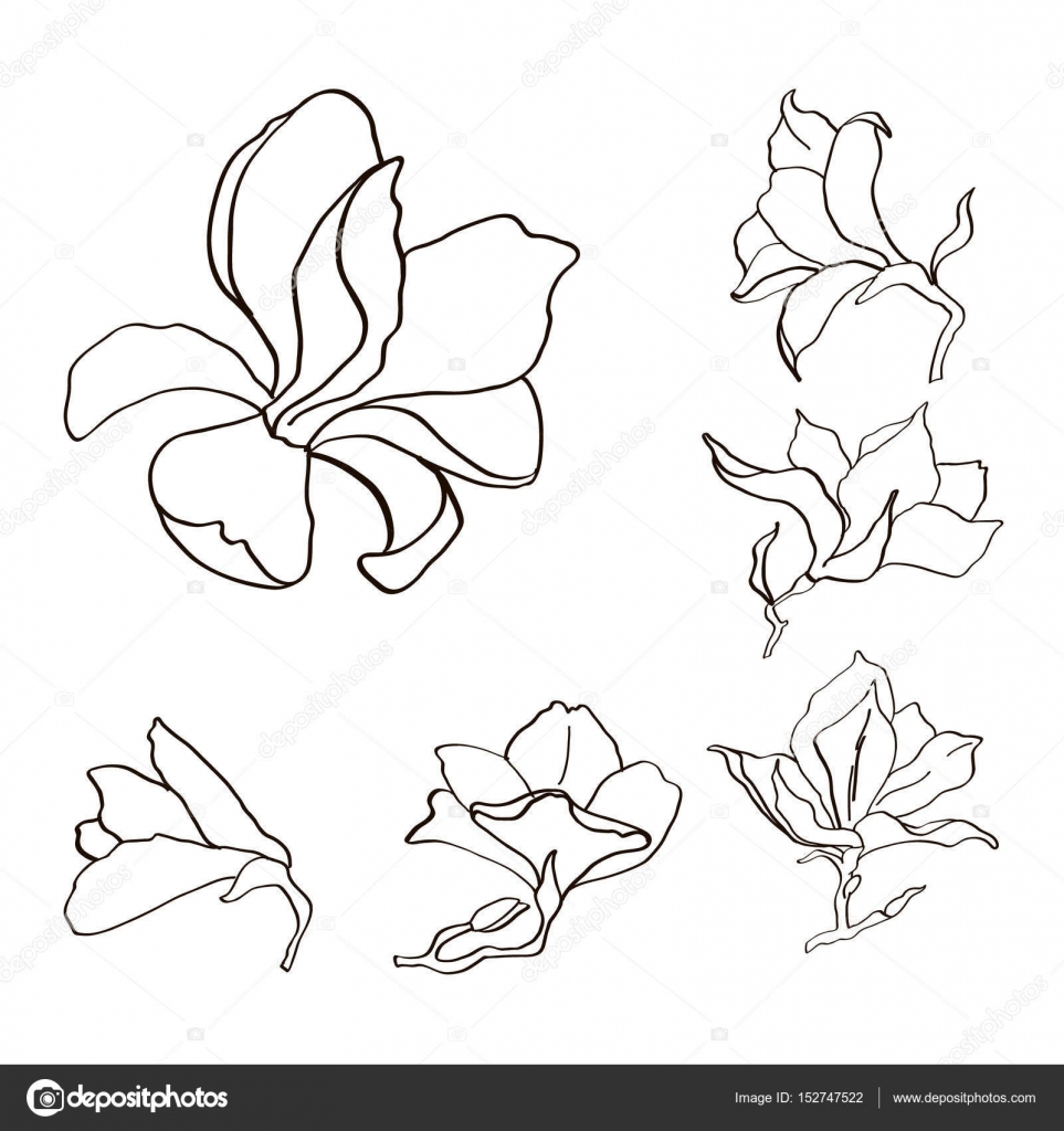 Magnolia Flower Set Outline Sketch Black And White Stock Vector