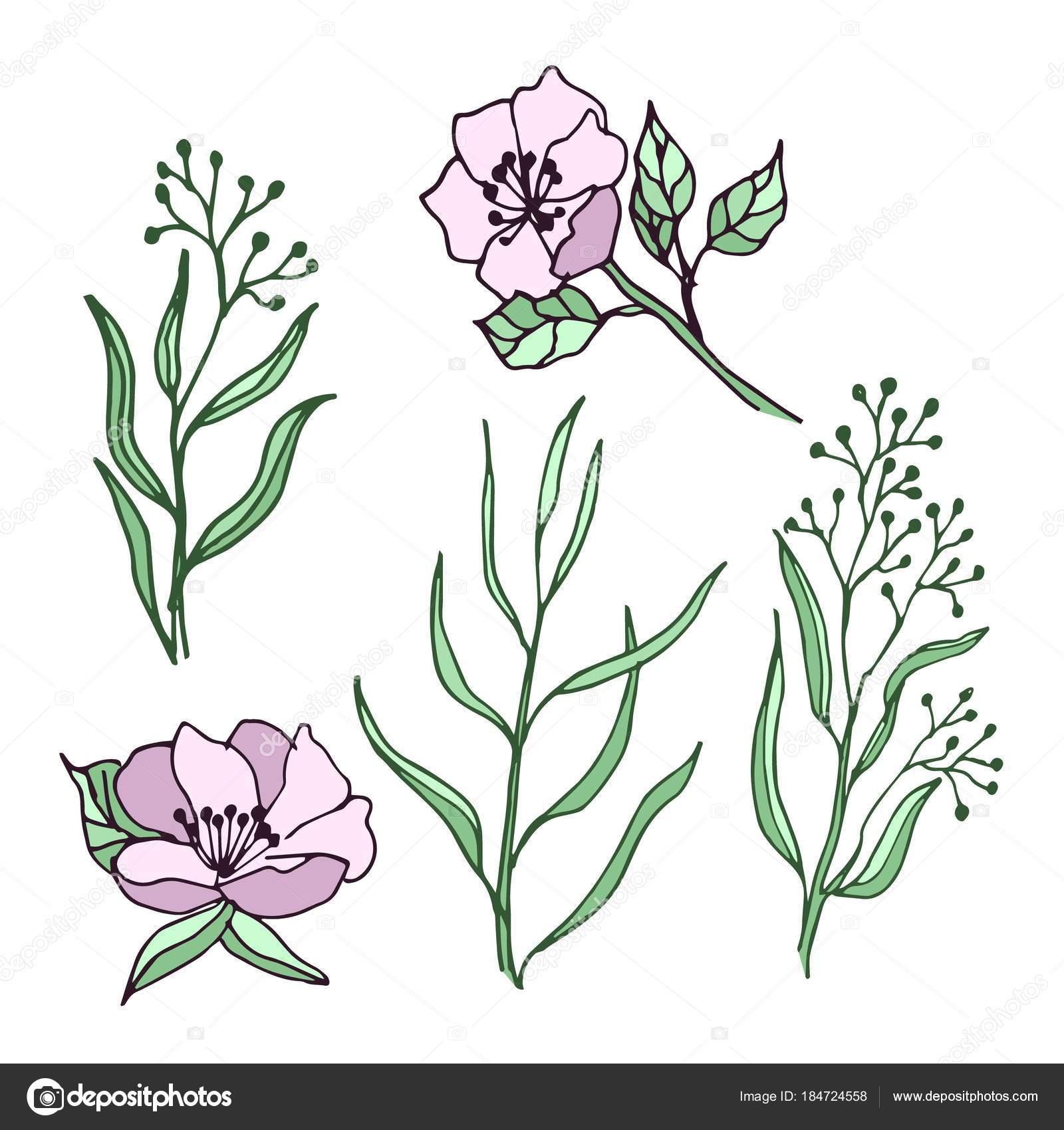 Jarni Kvety Listy Sada Vykresu Idealni Pro Pouziti Svatebni Pozvanky