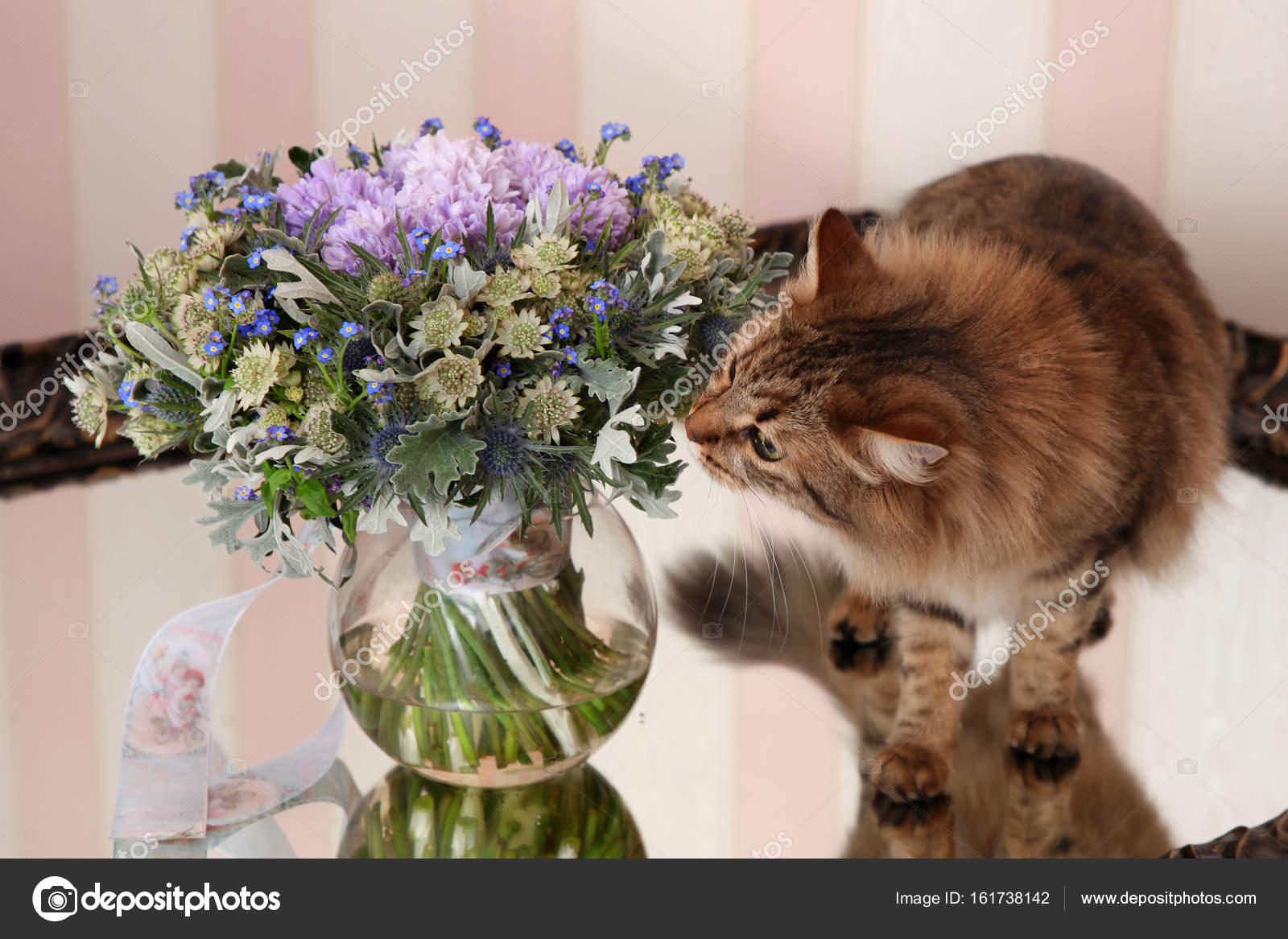 Букет из живых котят фото, свадебный букет классический