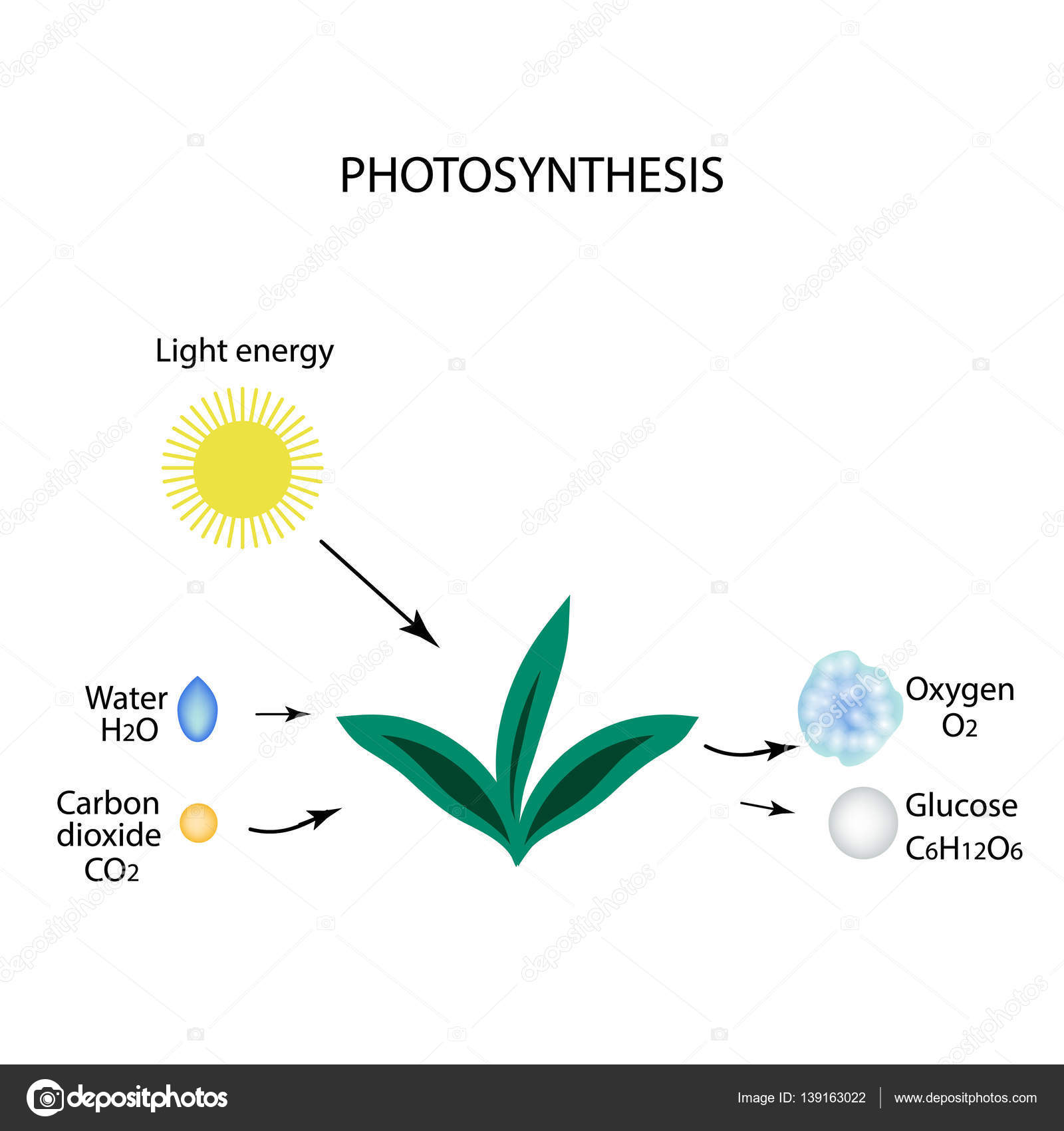plant photosythesis Photosynthesis is a process in which green plants use energy from the sun to transform water, carbon dioxide, and minerals into oxygen and organic compounds it is one example of how people and plants are dependent on each other in sustaining life.