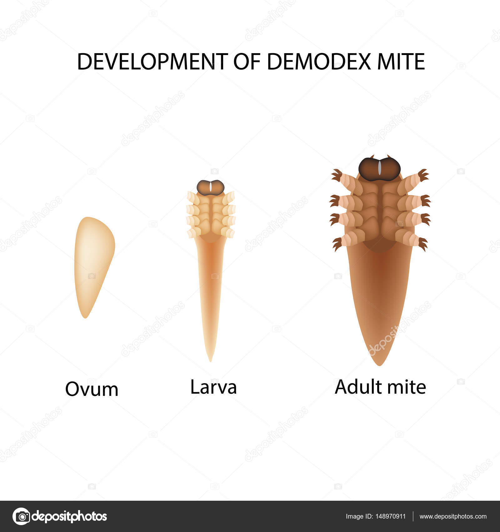how to get rid of demodex mites rosacea