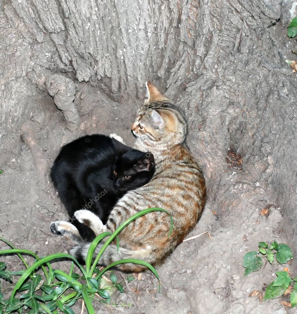Two cats lie under a tree. International Homeless Animals Day.