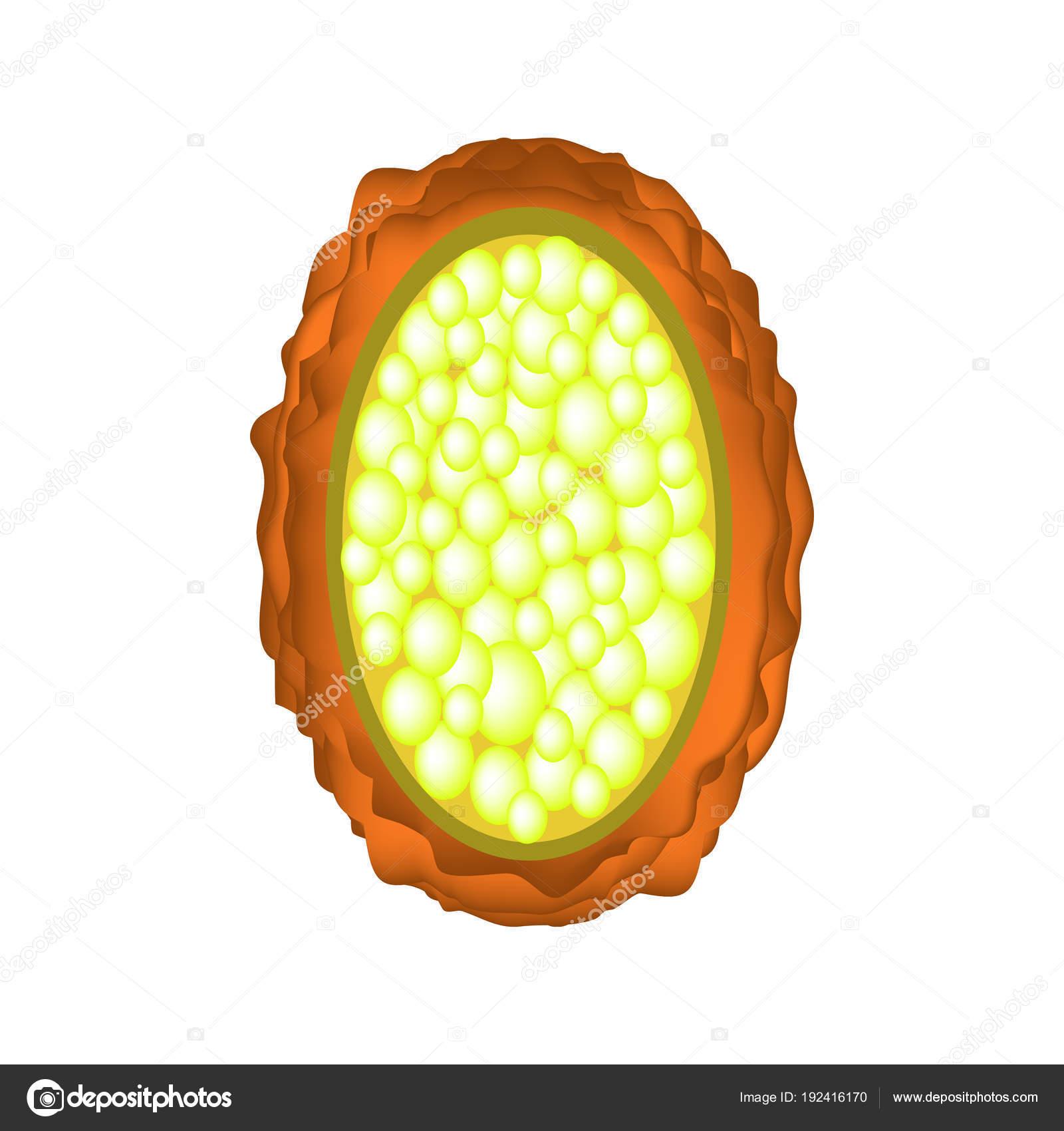 Ascaris tojás fotó mikroszkóp nélkül