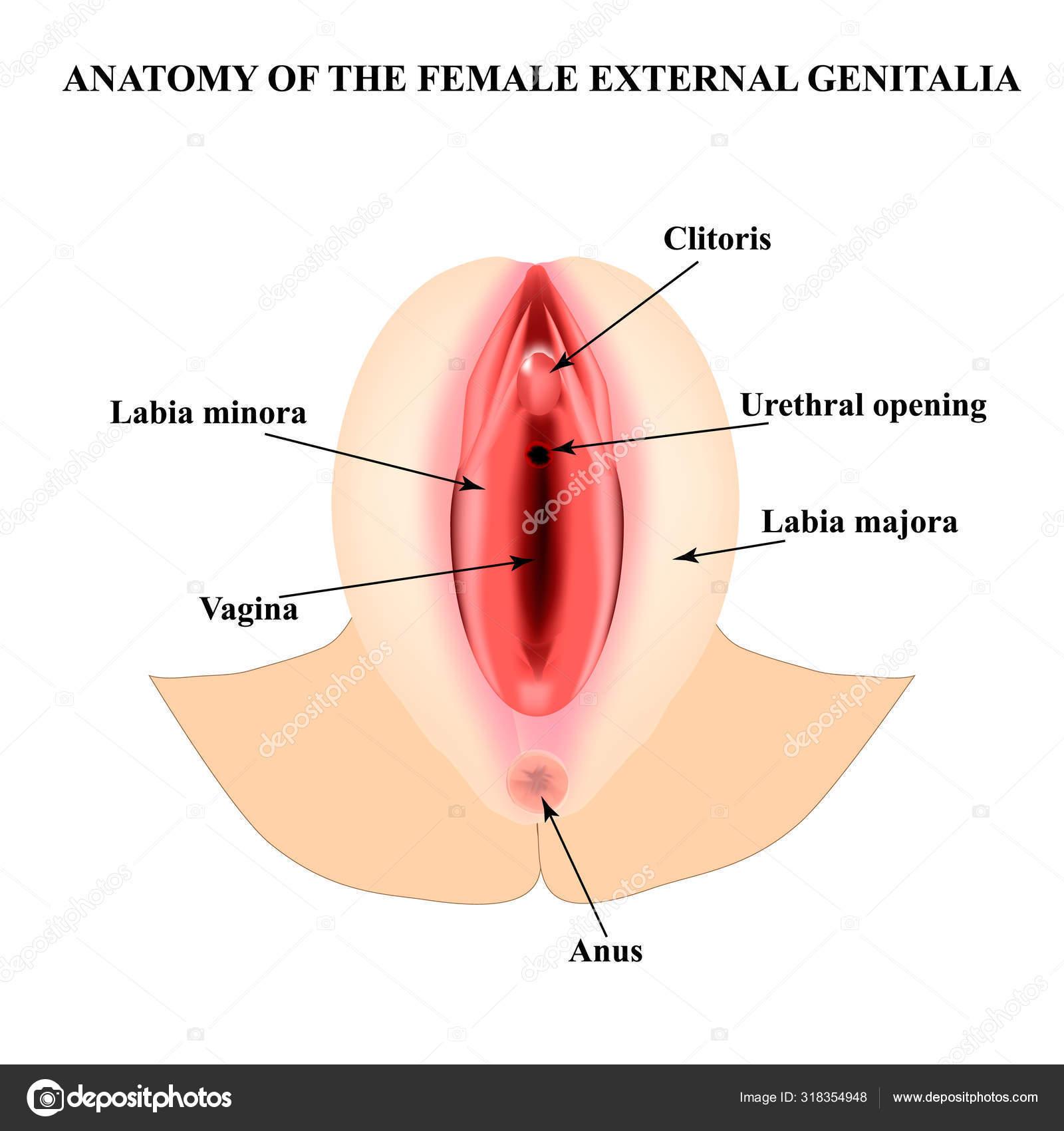 tera wray anal porno
