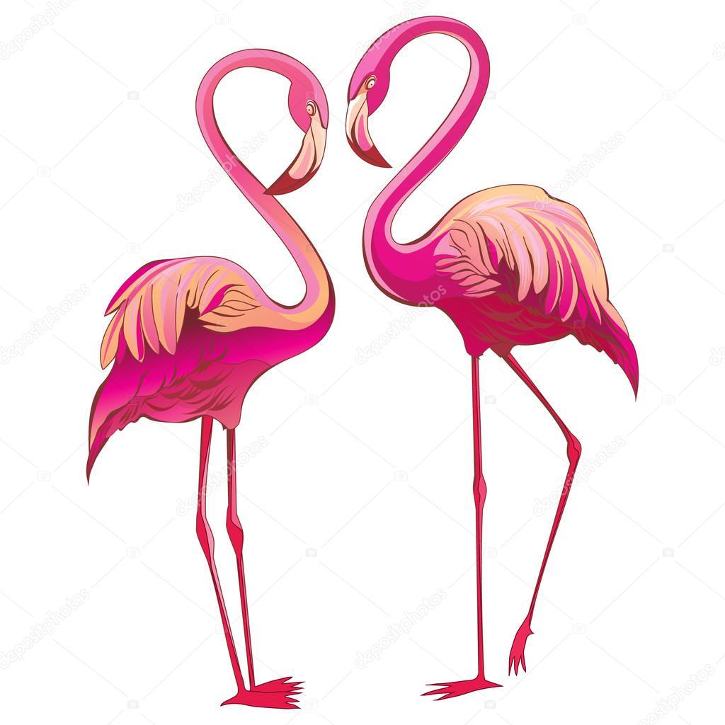 dos flamencos coloridos mirando mutuamente y construir una forma de ...