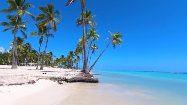 Trópusi paradicsom strand háttér. Palms Karib-tenger és Atlanti-óceán partvonala. Lassított mozgású utazási koncepció