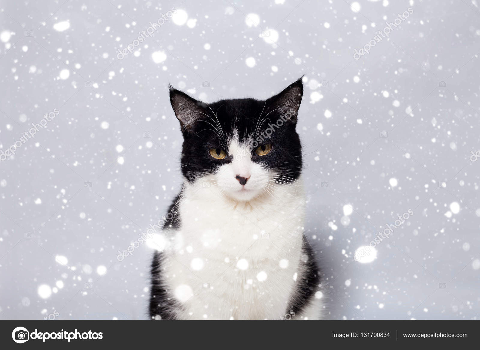 seated cute black and white cat looking camera — Stock Photo ...